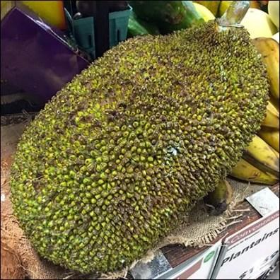 Conventional vs Organic Jackfruit Produce Feature