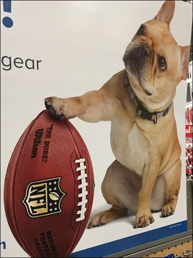 Branded NFL Kickoff of Pet Fashions