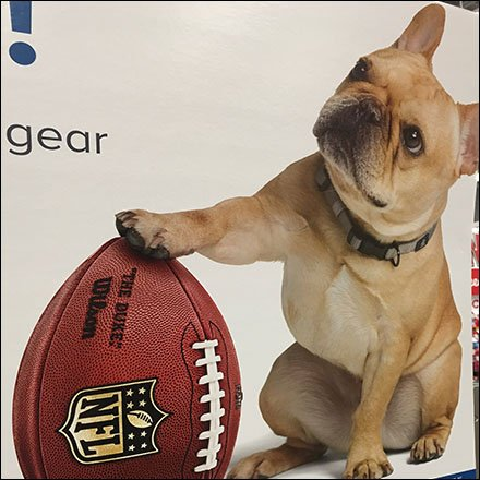 Branded NFL Kickoff Pet Fashions