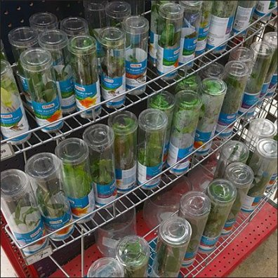 Tiered Aquarium Plant Curved Shelf Rack Feature
