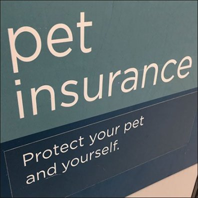 Pet Insurance To Protect Your Pet And Yourself