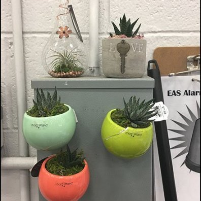 In-Store Air Plant Landscaping at The Hardware Store