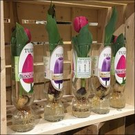 Tulip Merchandising by Wood Crate
