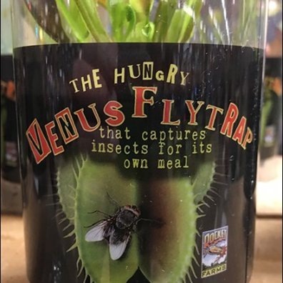 Planet-Friendly Venus Fly Trap Insect Control