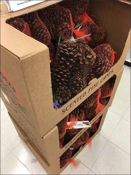 Scented Pine Cone Corrugated Bulk Bins