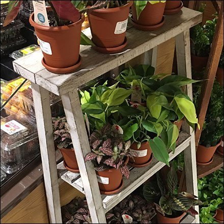 Plant Sales Lean-To Triangle Racks