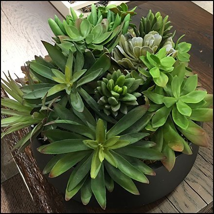 Nordstrom Table-Top Succulents Feature