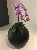 Elegant Orchid Stovetop Counterpoint Prop
