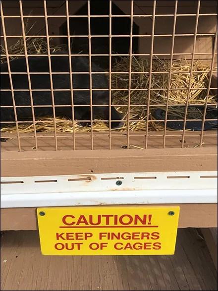 Bad Bunny Bites Warning Sign