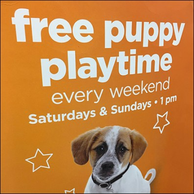 Tricorne Petco Free-Puppy-Playtime Sign