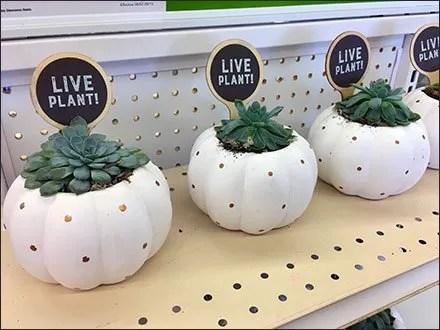 Back-Up Live Plant Labeling Strategy