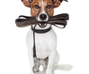 Dogwalker Nebenjob