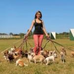 Hundesitter Dogwalker