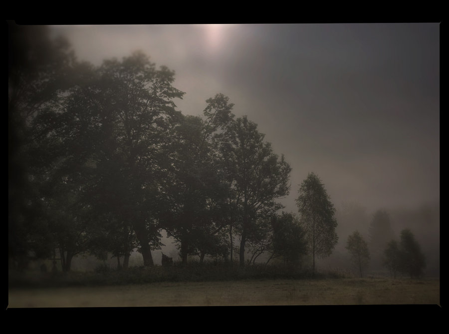 misty mysterious (12)