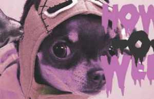 The Top 10 Freakiest Scariest Halloween Dog Costumes (9)
