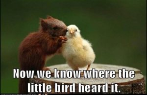 Hilarious Animals (7)