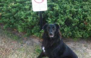 Rebellious Animals