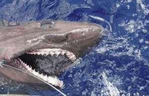 Shark Attack gifs