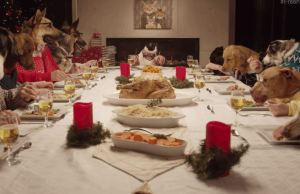 13 Dogs and 1 Cat Having A Hilarious Holiday Feast