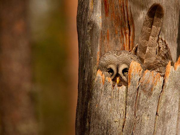 Knot an Owl