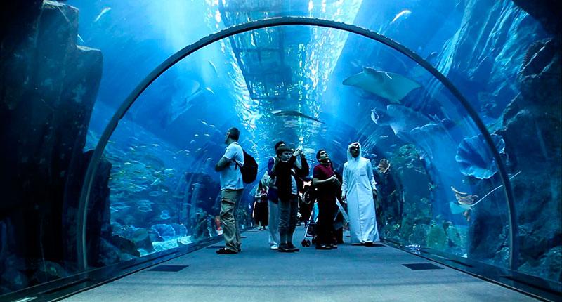 Dubai Wealth (12)