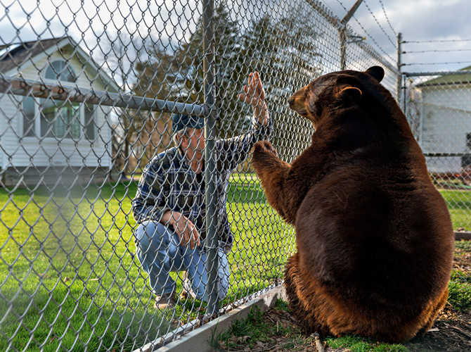 Owning a brown bear
