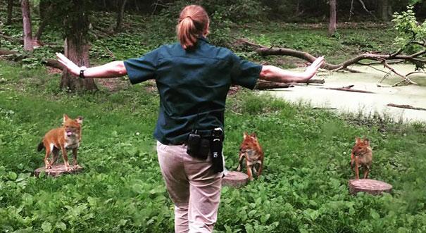 zookeepers-recreating-jurassic-world-raptor-scene-11__605