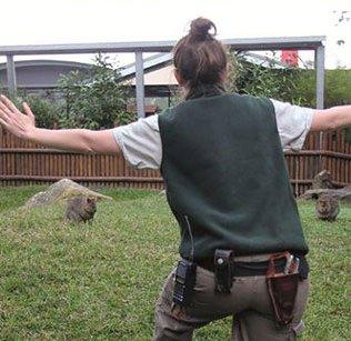 zookeepers-recreating-jurassic-world-raptor-scene