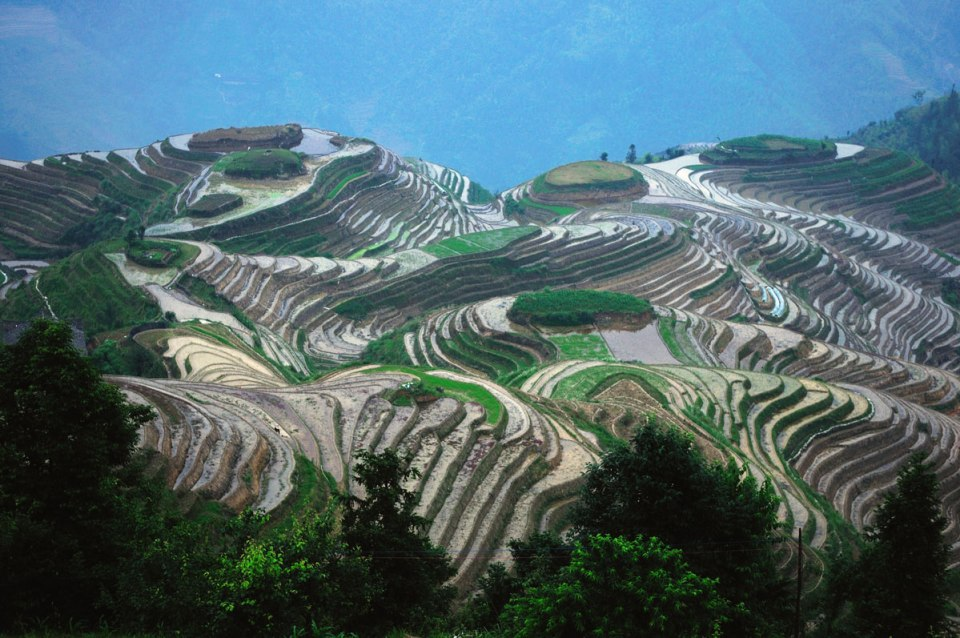 Rice Terraces ofChina