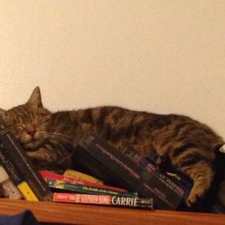Cats Can Sleep Anywhere