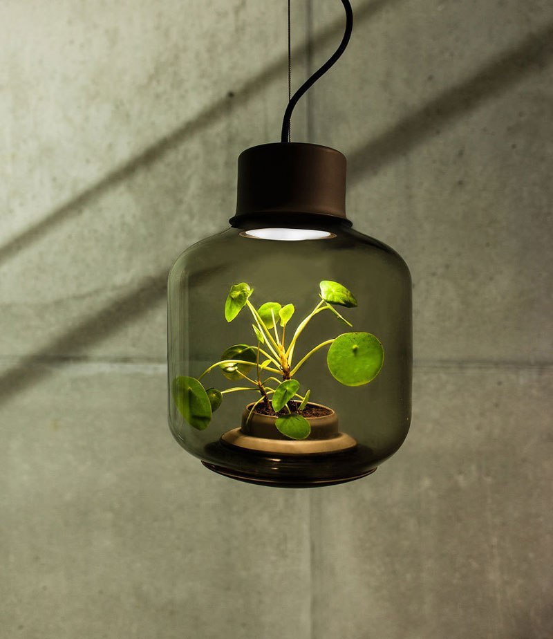 This is The Coolest Plant Lamp Which Can Grow Without Human Care