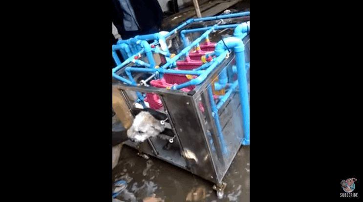 Automatic Dog Washing Machine