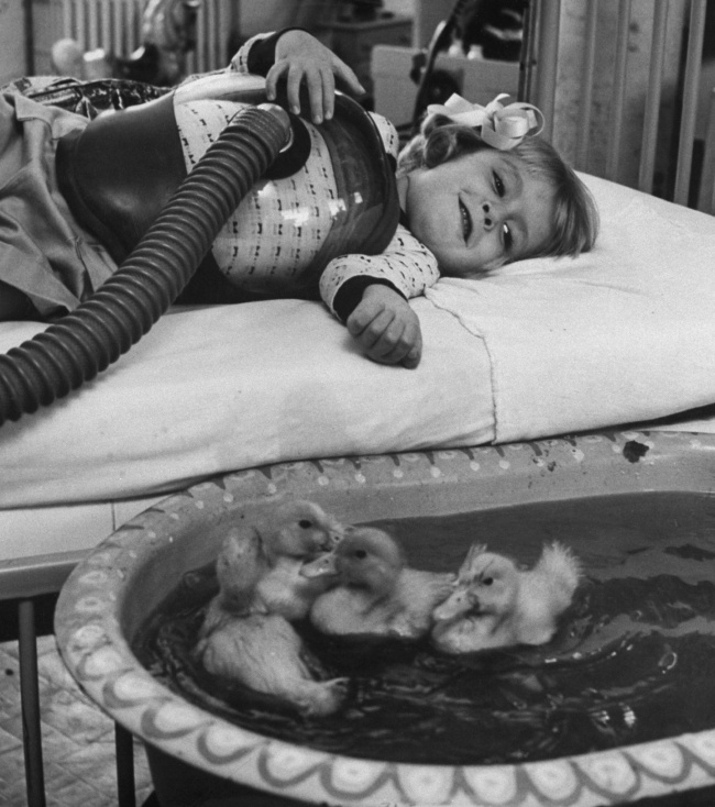 830105-les-animaux-etaient-utilises-en-tant-que-therapie-infantile-dans-les-hopitaux-americains-en-1956_164467_wide-650-96ac2dafea-1470726257