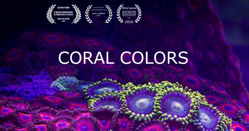 Coral Timelapse