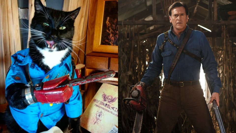 Cat Cosplaying as EVIL DEAD's Ash