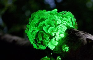 Fungi Timelapse from Planet Earth II