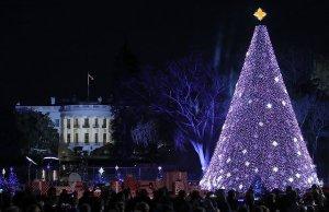 Christmas Trees Of 2016
