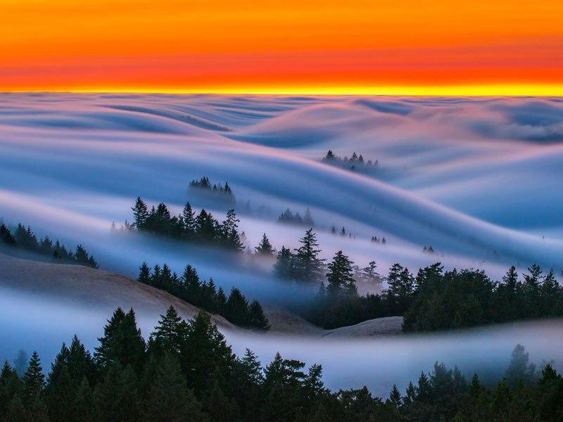 Fog Waves