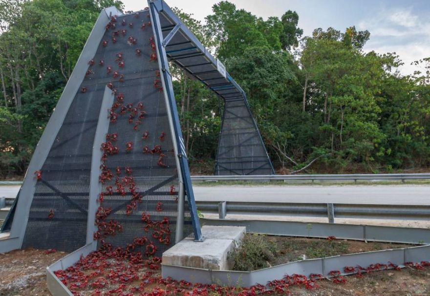 Crab Bridge On Christmas Island