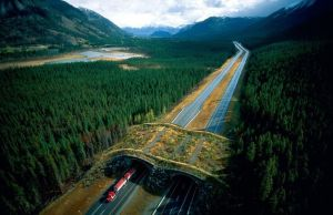 Ecoduct In Banff National Park, Canada