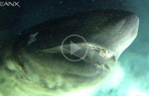 Ancient Deep Sea Shark That Predates Most Dinosaurs