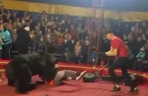 Russian Circus Bear Attacks