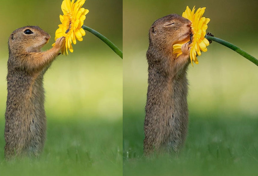squirrels sniffing flowers