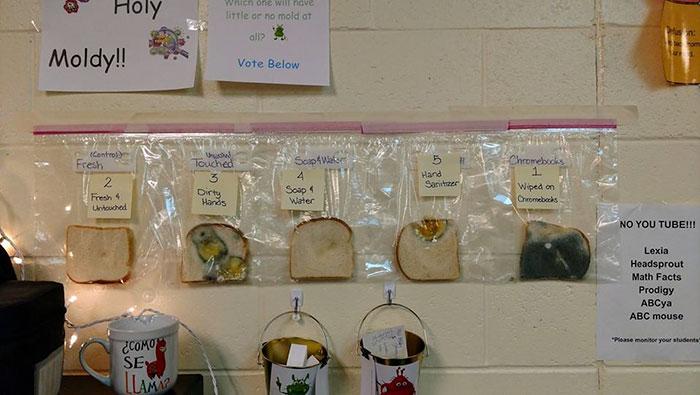 White Bread Science Experiment