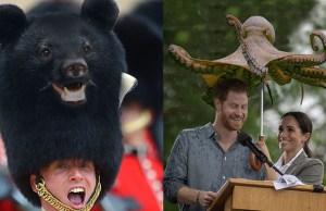 Photoshopping Animals