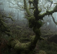 Mystical Wistman's Wood