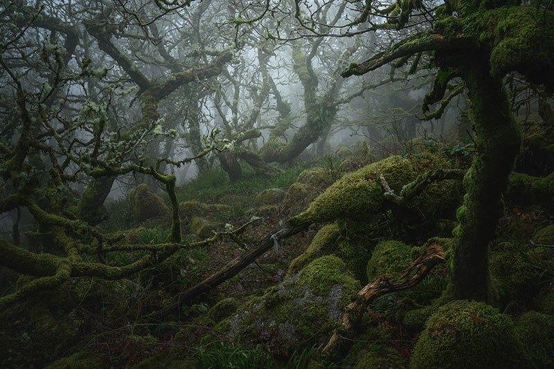 Mystical Wistman's Wood