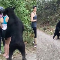 Bear Sneaks Up On A Group of Hikers