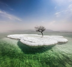 Dead Tree in Sea of Life
