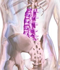 lumbális gerinc, derék